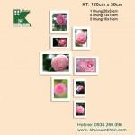 BK027-499X495